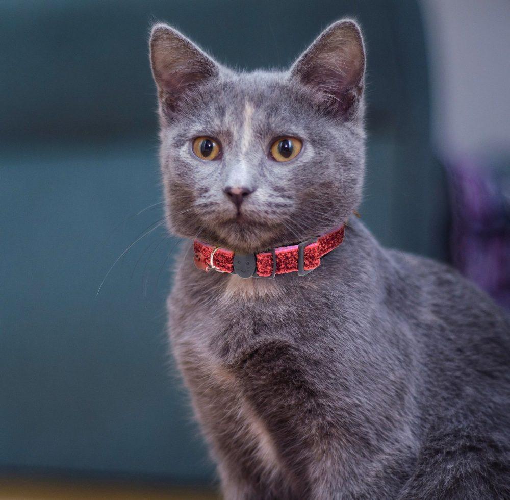 Glitter-Cat-Collar-Pink