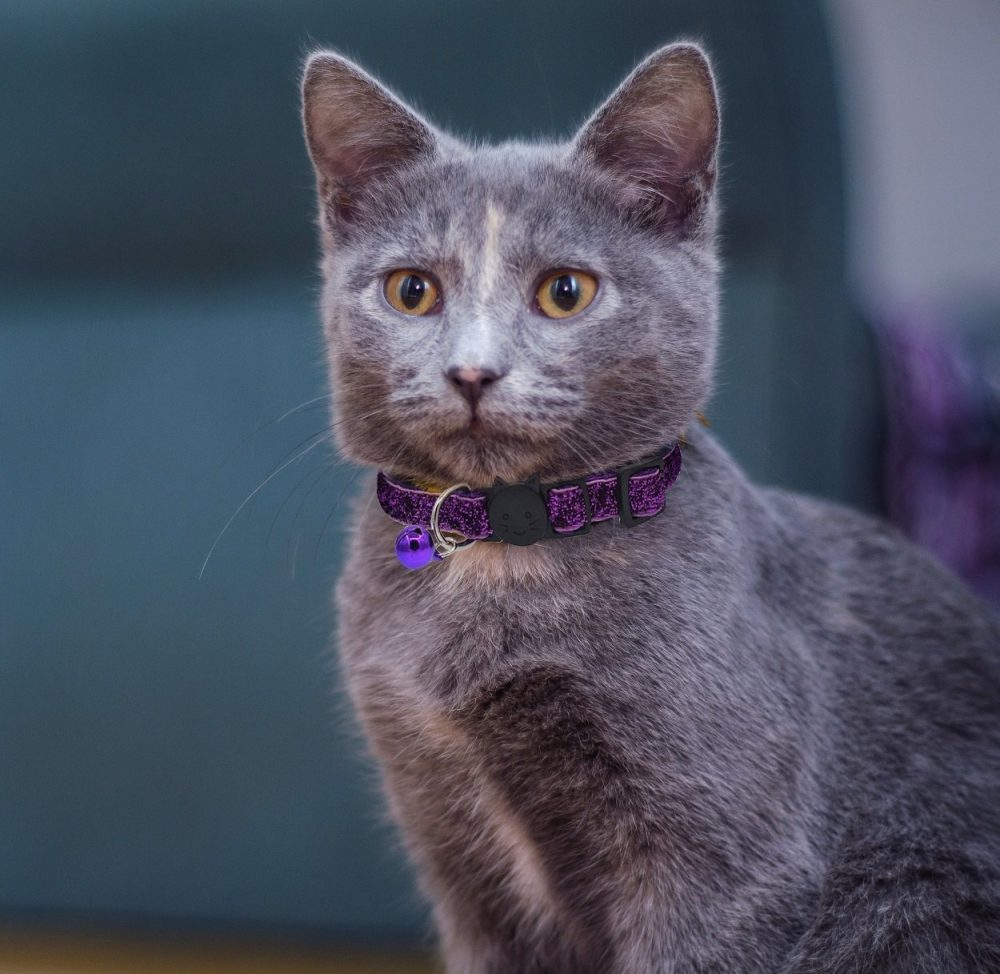 Glitter-Cat-Collar-Purple