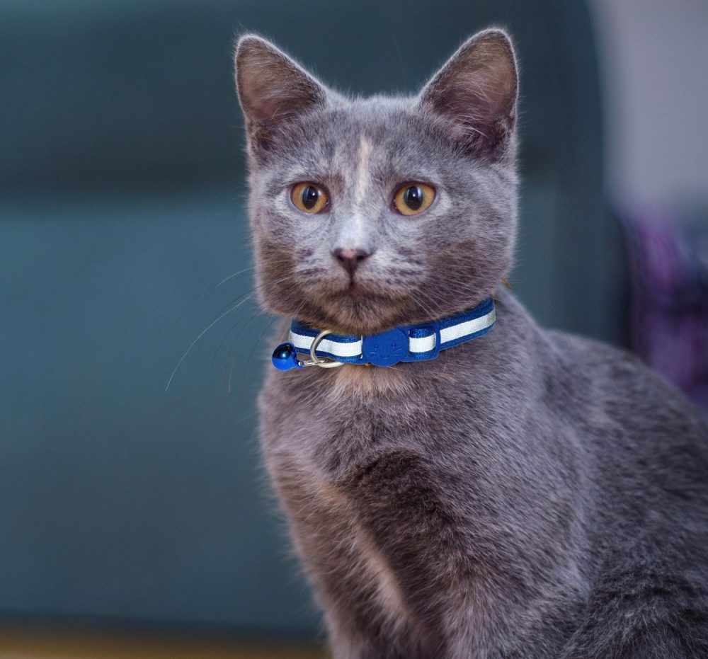 Reflective-Cat-Collar-Blue