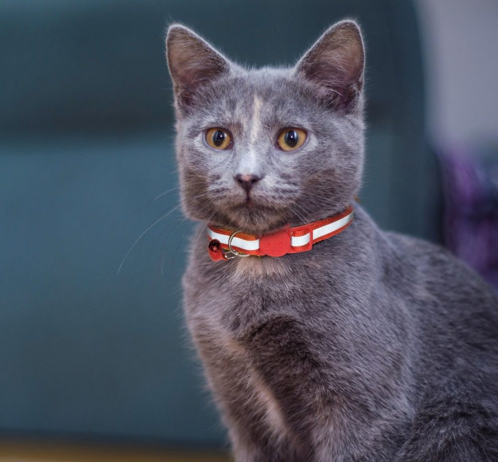 Reflective-Cat-Collar-Red