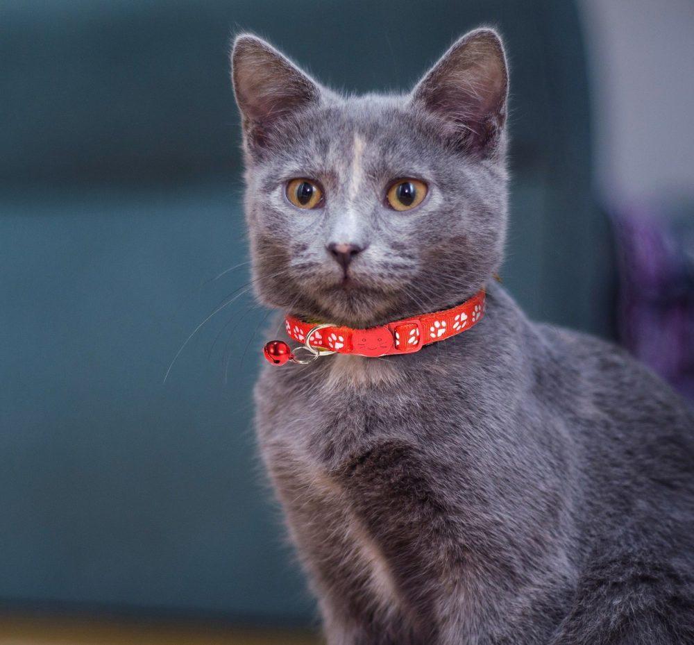 Cat-Collar-Red.