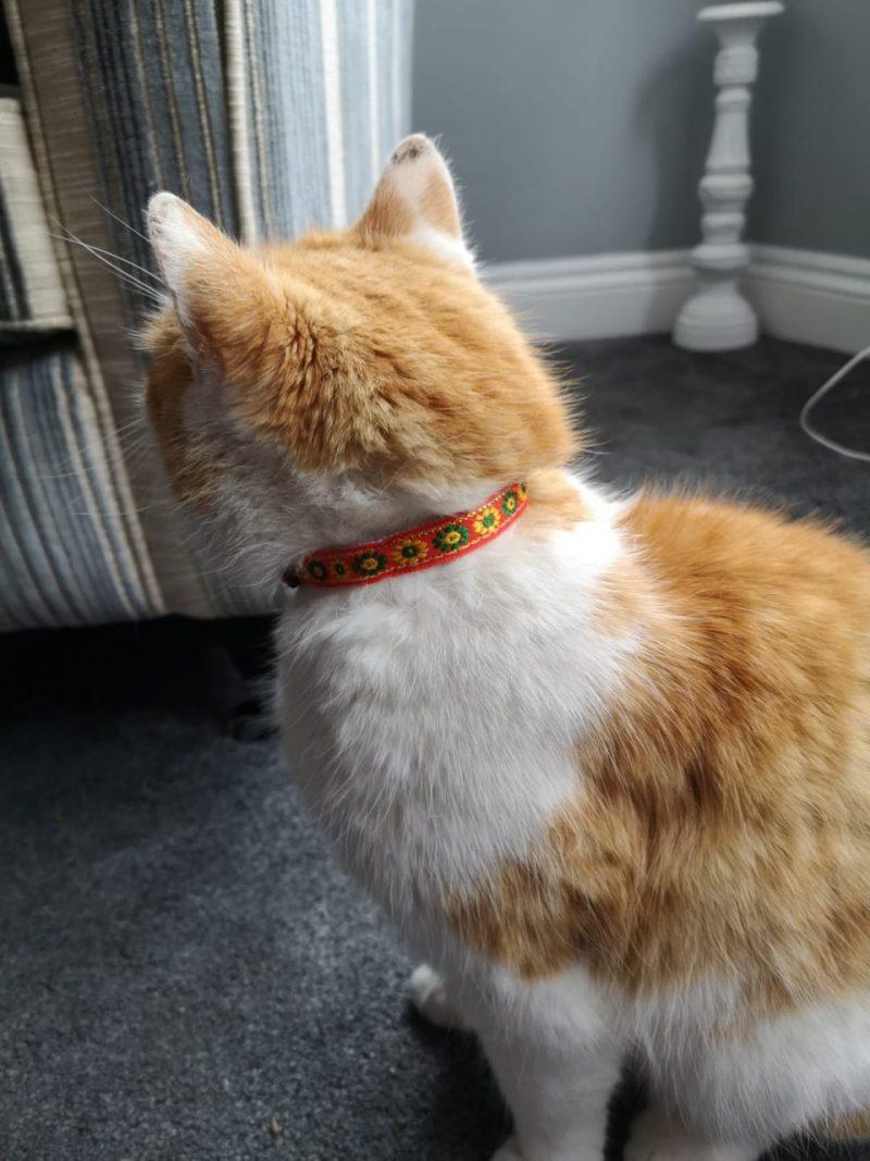 Orange Flower Print Collar