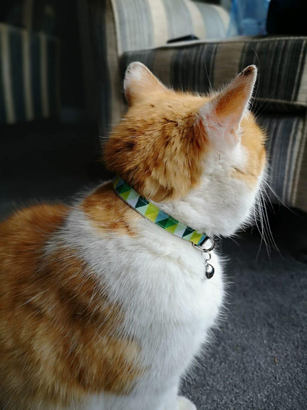Green Chevron Collar