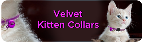 Velvet Kitten Collars