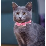 Bow Style Cat Collar, Pink (Single Pack)