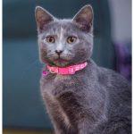 Paw Print Cat Collar, Rose (Single Pack)