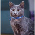 Blue Fish Print Cat Collar (Single Pack)