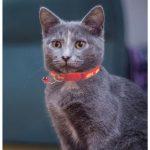 Red Fish Print Cat Collar (Single Pack)