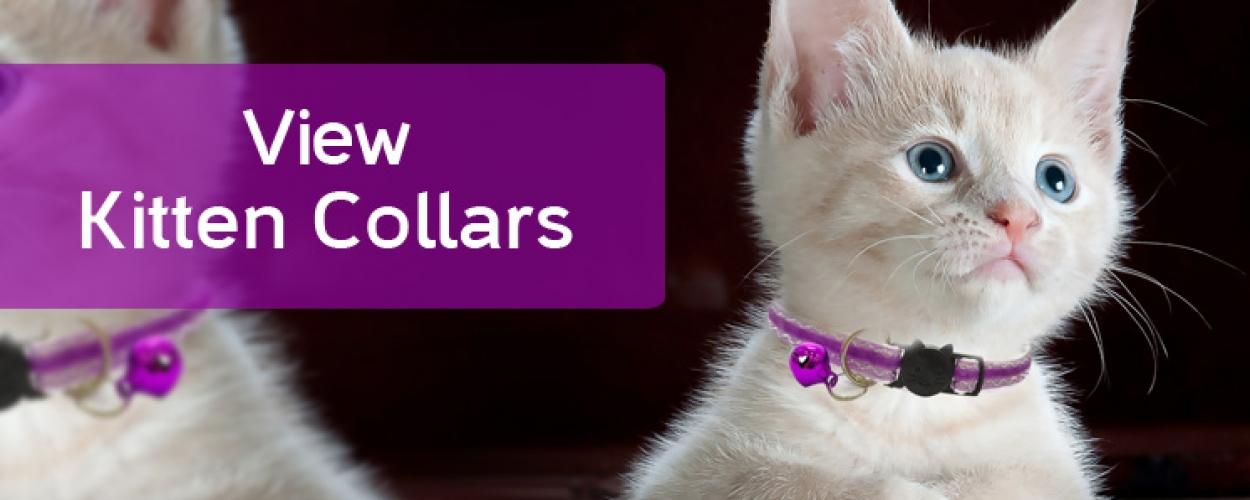 Kitten Collars